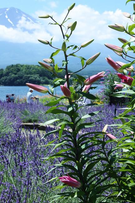 河口湖 022-1