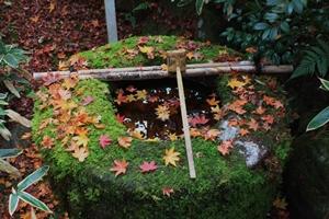 大徳寺・高桐院の紅葉