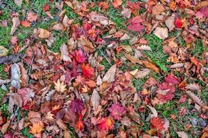 秋の日光紅葉だより