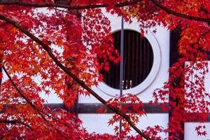 京都の紅葉 「京都の秋 音楽祭」