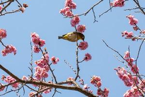 春の京・広上・京響