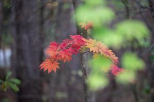 ほっこり軽井沢の秋