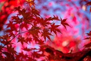 美しき永観堂の紅葉
