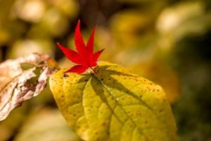 蘇峰公園の紅葉