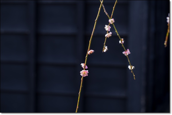 ps東慶寺 031-001
