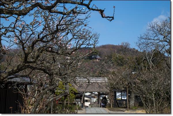 ps東慶寺 080-002