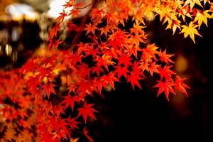 永観堂・平等院の紅葉