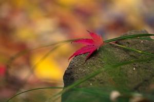 秋の彩・いろどり