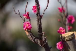 デジブック「春の声」